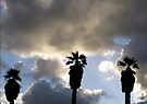 Palmtrees at Kleinmond. by Elizabeth Kendall