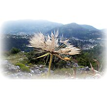 Airy and elegant plant  ! Photographic Print