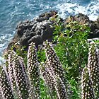 Coastal flowers by solena432