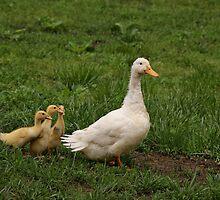 Little Family by Sandy Keeton