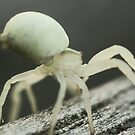 Macro Spider 8 by Sam Mortimer