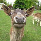 Deer Hypnosis by Ladymoose