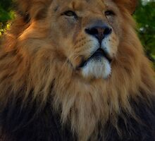 The Lion King.. by ElsieBell