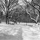 Winter Wonderland, Central Park by Alberto  DeJesus