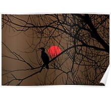 cormorant at sunset Poster