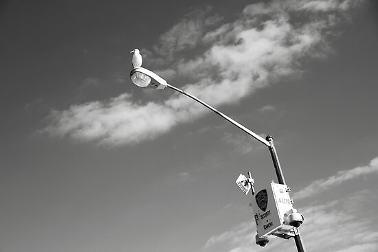 Bird's Eye Patrol by DmitriyM