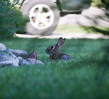 Rabbit in Suburbia by eegibson