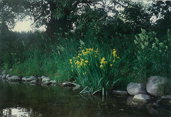 beautiful wild tulips gowing in the shade of huge trees on the banks of the Mighty Grand River by Joseph Green