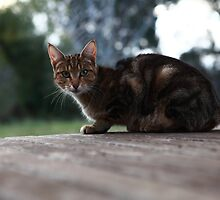 Green Eyed Cat by Patrick Keevil