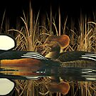 Hooded Meganser Ducks by Walter Colvin