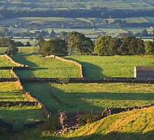 Morning Light near Askrigg - Yorkshire Dales by Dave Lawrance