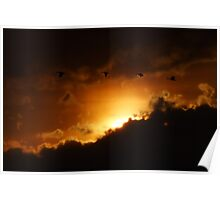 Geese Sunset Poster