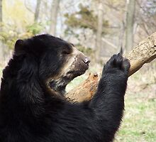 FLUSHING ZOO BEAR by Here2Stay333