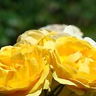 Yellow Roses Bouquet Nature art Floral Baslee Troutman by BasleeArtPrints
