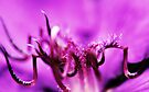 The Heart Of A Flower by Evita
