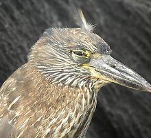 Heron Closing Eyes by Amanda Ziegelbauer