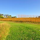 Tarrawarra Vineyard, Victoria Australia by Chris Jones
