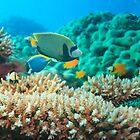 Underwater panorama by MotHaiBaPhoto Dmitry & Olga