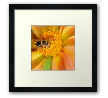 Liquid gold Framed Print