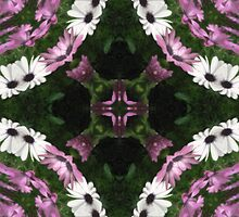 Purple and White Daisies Kaleidoscope 11 by Christopher Johnson