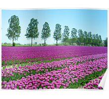Purple Tulipfield Poster