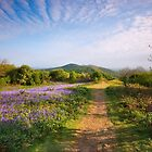Malvern Hills : Midsummer Bluebells 2 by Angie Latham
