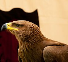 Red Eagle (Aguila Roja) by Mxmn