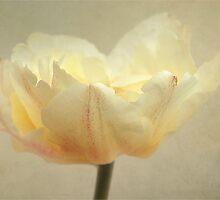 shining light by Iris Lehnhardt