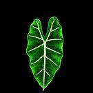 Love Leaf by Jamie Lee