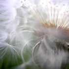 Dust in the Wind by andreajansen