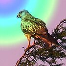 Red Kite by Sarah Russell