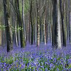 a springtime panorama by outwest photography.co.uk