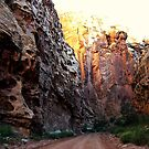 Down An Ancient Path - Capitol Reef National Park, UT by Rebel Kreklow