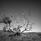 Scary Tree- View to Mount Remarkable by Ben Loveday