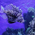Lion Fish - Denver Aquarium by Margot Ardourel