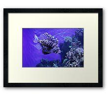 Lion Fish - Denver Aquarium Framed Print