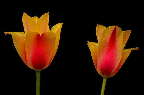 Twins On Black by Nick Boren