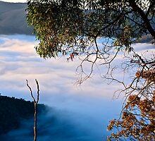Misty Morning. by Warren  Patten