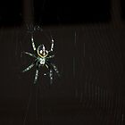 Along came a spider... by guppyman