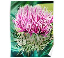 Grey Lady Thistle - oil painting of a wild thistle Poster