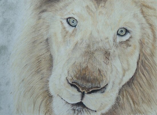 Casper the White Lion by Pamela Stirling