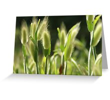Hare's-Tail Grass Greeting Card