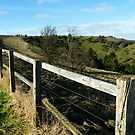 Kingsclere Downs by Llawphotography