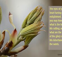 The Hope and the Glory ~ Eph 1:18 by Robin Clifton