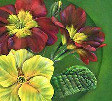Primula by Sarah Trett