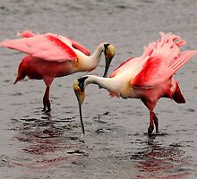 Spoonbills Greeting by Tom Dunkerton