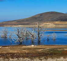 By the Lake - Adaminaby, NSW. by kpra1