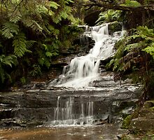 Leura Cascades, Blue Mountains, NSW by Isabel J Coote Photography