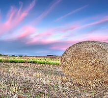 Fairy Floss Sky Panorama by Shannon Rogers