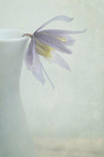 blue clematis by Iris Lehnhardt